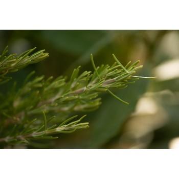 100g of Rosemary